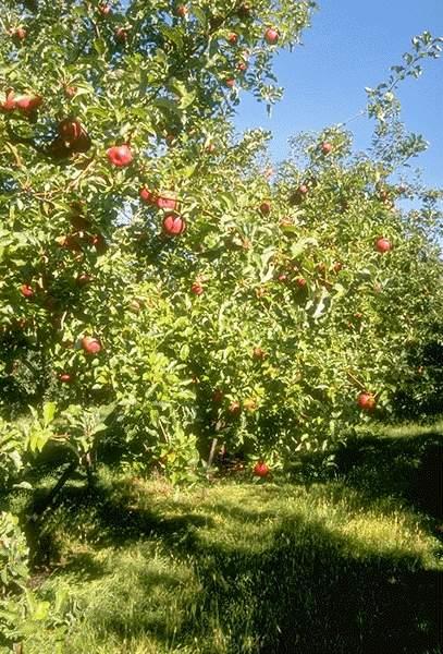 Est-ce que ce sont des fruits pour l'usufruitier, ou verra-t-on naître un quasi-usufruit ?